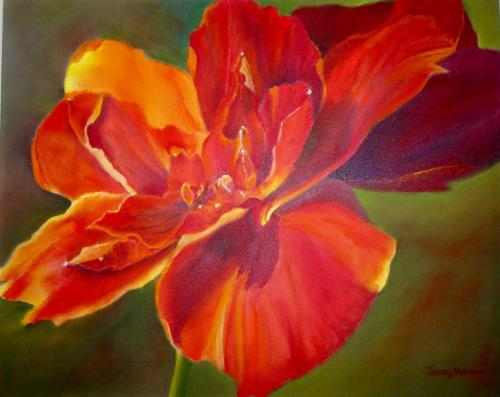 Amaryllis by Jenny Norman